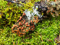 Moss lichen and fungi multi colored growing on log in the woods Stock Photos
