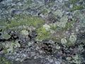 Moss and lichen on rock Royalty Free Stock Images