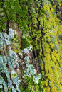 Moss and Lichens Royalty Free Stock Photography