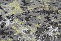 Moss and lichens Stock Photo