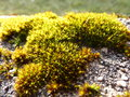Moss macro Stock Photography
