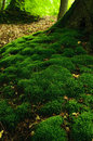 Moss mossy ground in the beech forest Royalty Free Stock Photos