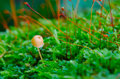 Moss and mushroom Royalty Free Stock Photos