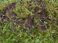 Moss and mushroom detail of a mossy overgrown Stock Images