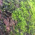 Moss on the old tree Royalty Free Stock Photo
