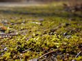 Moss on path with blurred background forest Stock Photography