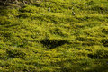 Moss and peat in lawn Royalty Free Stock Photography
