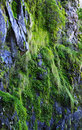 Moss and plants on the cliff Royalty Free Stock Photo