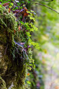 Moss and plants on rock Royalty Free Stock Photo