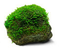 Stock Images Moss and rock