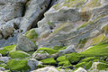 Moss on rock abstract Royalty Free Stock Photography