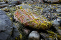 Moss on rock glacial with yellow Royalty Free Stock Photography