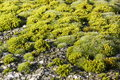 Moss on a rock looking like a miniature world Stock Images