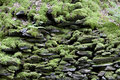 Moss rock wall background Royalty Free Stock Photo