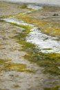 Moss and sand pattern Stock Photography