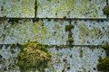 Moss on shingles Stock Photo