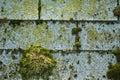 Moss on shingles Royalty Free Stock Photo