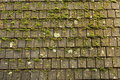 Moss and shingles Royalty Free Stock Photo