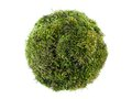 Moss sphere Royalty Free Stock Photo
