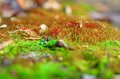 Moss sprouts green with red shoots Royalty Free Stock Image