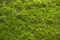 Moss on stone Royalty Free Stock Photos