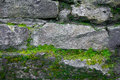 Moss and stone background. Texture of brick wall. The old rock in the wood -grown. Royalty Free Stock Photo
