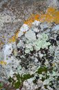 Moss on stone covered with colored for backgrounds Stock Photography