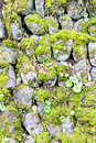 Moss on stone gathering various stones Stock Images