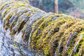 Moss on a stone wall Stock Photo