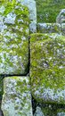 Moss in stone wall castle Royalty Free Stock Photo