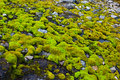 Moss on stones Royalty Free Stock Images
