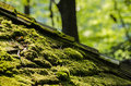 Moss in sunlight growing on roof Royalty Free Stock Photo