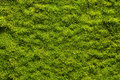 Moss texture background with copy space Royalty Free Stock Photography