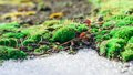 Moss and thawing snow bright green in an environment of Stock Image