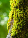 Moss on a three Royalty Free Stock Photo