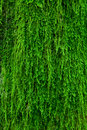 Moss on a tree bark Royalty Free Stock Photo