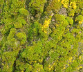 Moss and tree bark texture in close up Stock Photos