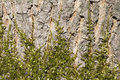 Moss on a tree covering bark in the sunlight Royalty Free Stock Photo