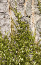 Moss on a tree covering bark in the sunlight Stock Photo
