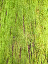 Moss on tree deep covering of bright green a trunk Stock Photo