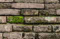 Moss on the wall with old bricks Stock Photography