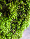 Moss at wood Royalty Free Stock Images