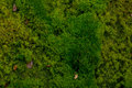 Mosses close up o creating abstract natural mosaic of plants in different colors Stock Photo