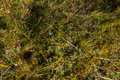 Mosses close up o creating abstract natural mosaic of plants in different colors Royalty Free Stock Photos