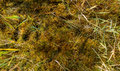 Mosses close up o creating abstract natural mosaic of plants in different colors Stock Images