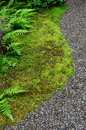 Mosses ferns and fine stones in a japanese garden Stock Photos
