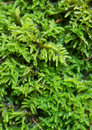Mosses green grow on a rock on waterfall Royalty Free Stock Photos