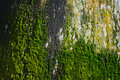Mosses growing on tree trunk Stock Photos