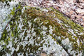 Mosses and lichens on a bounder growing boulder located the blue ridge parkway in central virginia usa Stock Images