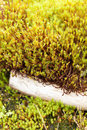Mosses on piece of wood Royalty Free Stock Photos